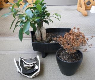割れた鉢と植物.jpg